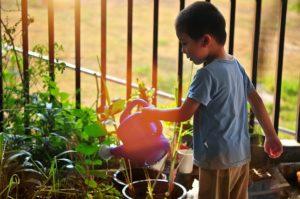 Junge-Garten